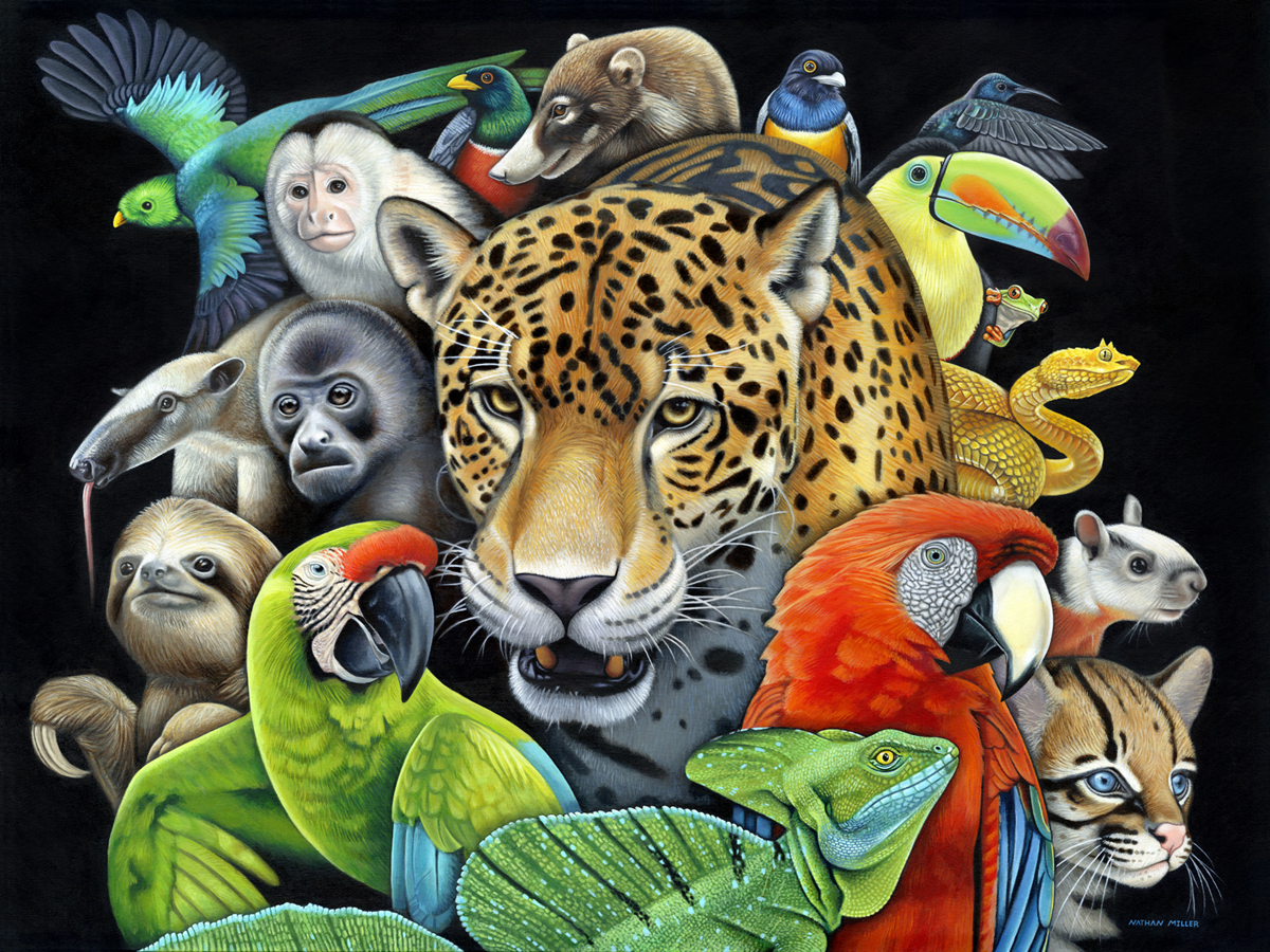 Circle of Life - Costa Rican Art by Nathan Miller