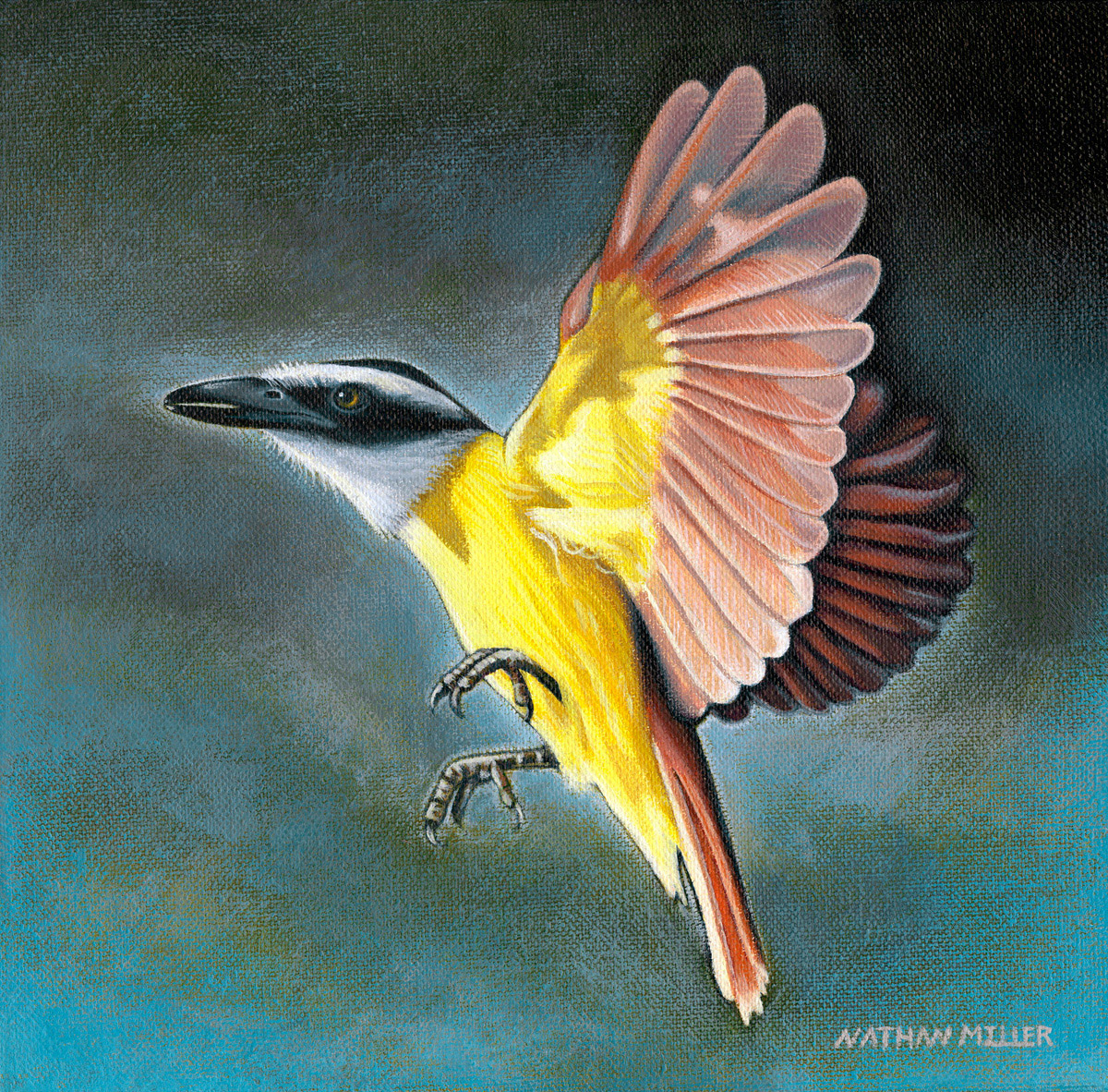 The Great Kiskadee - Art by Nathan Miller