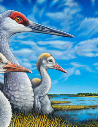 Sandhill Cranes Painting - Art by Nathan Miller