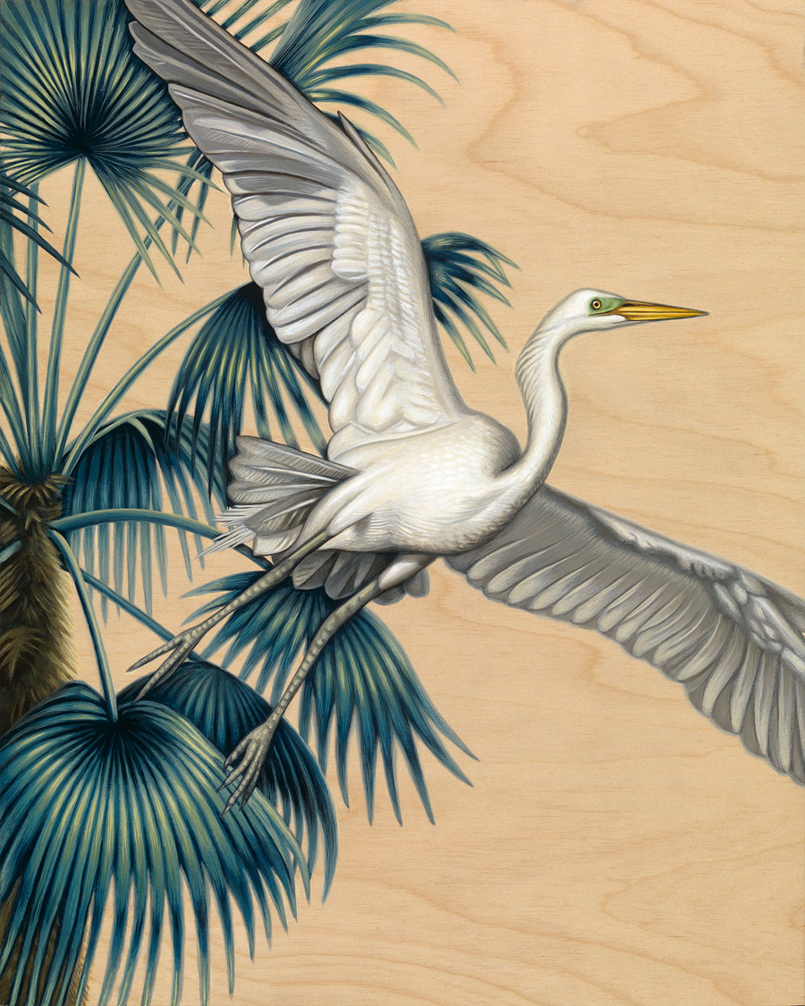 Egret in Flight - Art by Nathan Miller