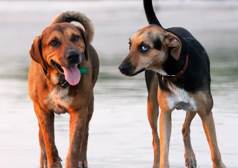 My two dogs
