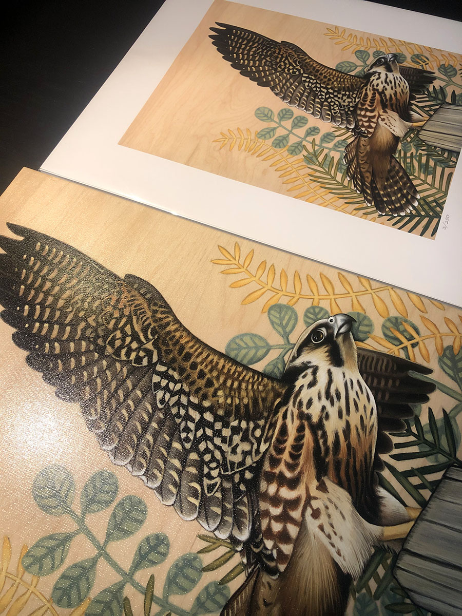 Peregrine Falcon Print Comparison