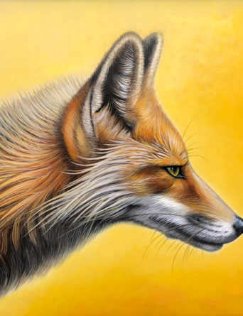 Red Fox - Art by Nathan Miller