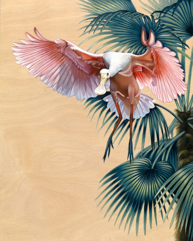 Spoonbill in Flight - Art by Nathan Miller