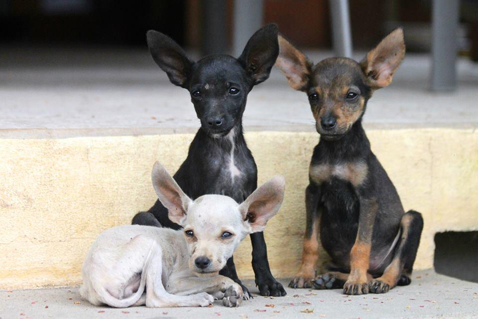 Stray Puppies